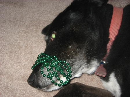 Shadow wears beads